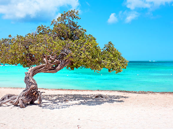 Croisière Aruba(Aruba)