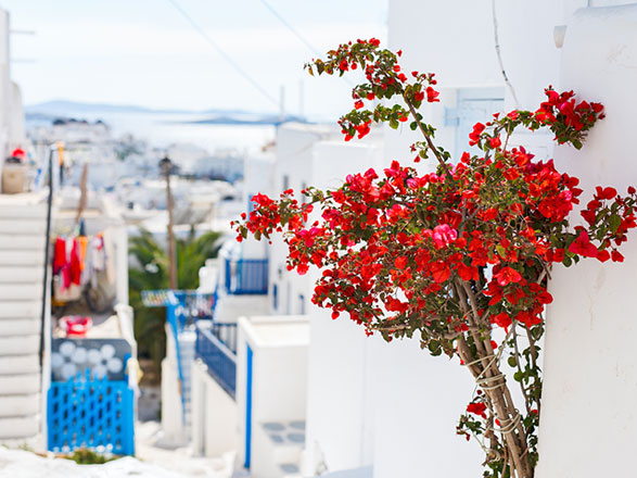 Croisière Mykonos