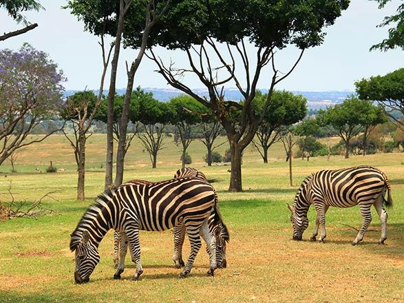 Croisière L'Afrique Australe : Expérience inédite aux confins du monde (11Z_PP)