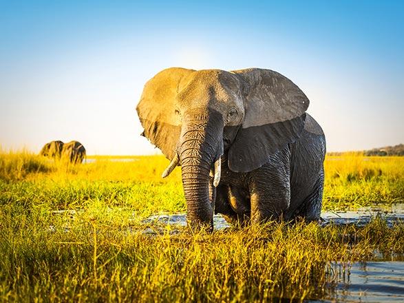 Croisière Afrique Australe : Expérience inédite aux confins du monde avec pré-programme au Cap de Bonne Espérance (14Z)
