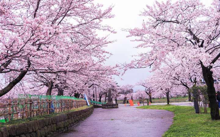 Croisière Niigata