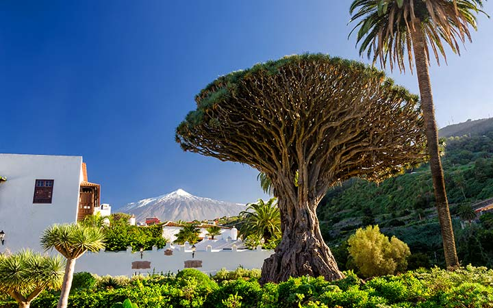 Croisière Santa Cruz de Tenerife