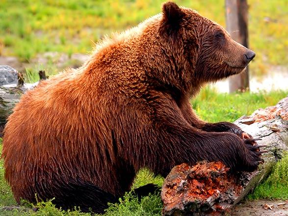 croisière Alaska : Alaska du nord au sud