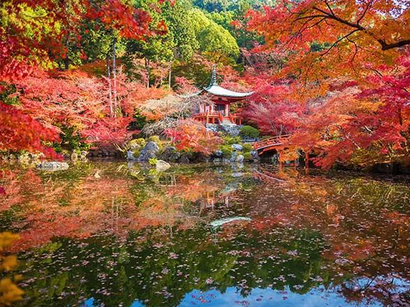 EXCLUSIVITÉ ! PACKAGE Voyage au Japon et en Corée du Sud
