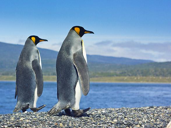 Croisière EXPÉDITION : L'Antarctique emblématique (Vols domestiques inclus)
