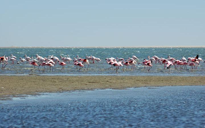 Croisière Walvis Bay